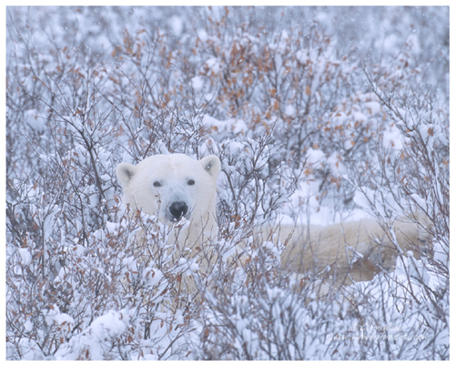 Plants and Animals of the arctic 5 - National...